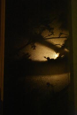 Ombre sul vetro di joysphoto