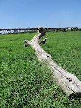 Photo: Driftwood in the meadow.