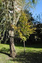 Photo: Faia  Desaparecida no 2013