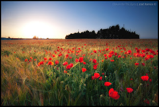 """Photo: """"Opium for The Eyes"""" - landscape photo in Alentejo - Portugal"""