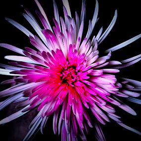 Beautiful Color by Jennifer Parmelee - Flowers Flower Arangements ( style, colors, scents, flowers )