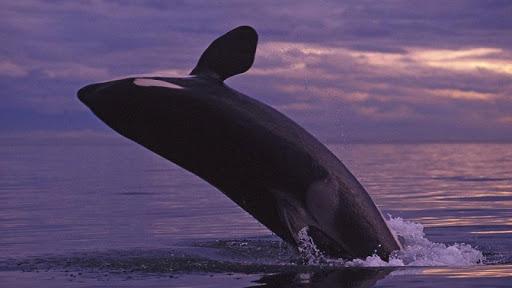 whale wallpaper hd 🐋 screenshot 3