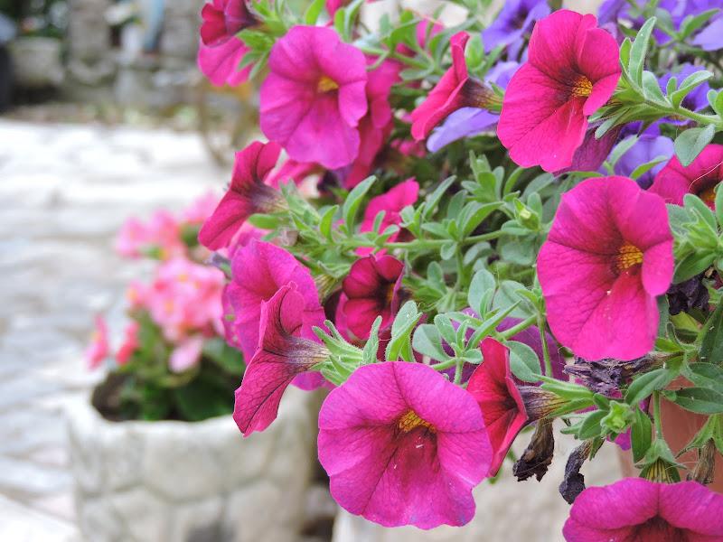 Prmavera in rosa  di Eleonora_Mos