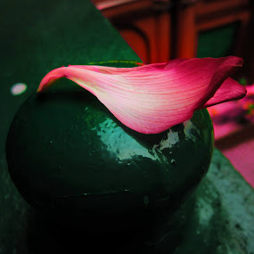 The Solitary Petal by Bihong Kollogov - Artistic Objects Still Life
