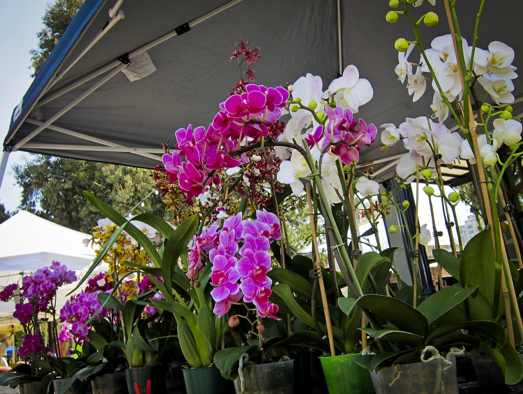 Photo: Farmers Market in downtown San Jose-San Pedro Square Market-Great family dining and entertainment in downtown San Jose.Unique restaurants,farmers market and live music.Catch Enjoy lunch or brunch in the Plaza of the Peralta Adobe. Experience the Farmer's market every Saturday.San Pedro Square Market is a fun place to spend time with family and friends.