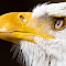 Bald Eagle Profile 04 06 2018.jpg