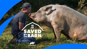 Saved By The Barn thumbnail