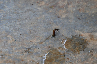 """Photo: A Leech at the Jungle Resort we stayed at """"on the River"""""""