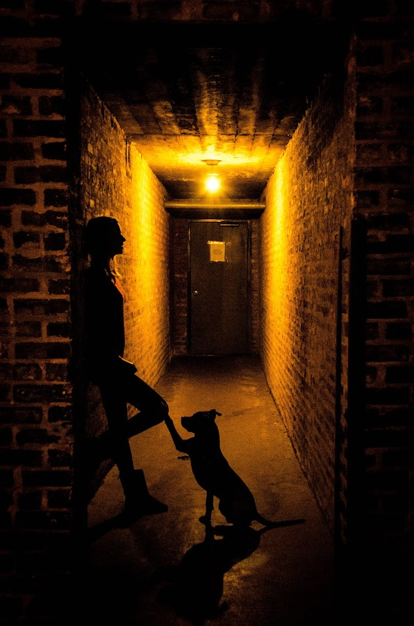 Consolation by Jess Anderson - People Street & Candids ( woman with dog, companion, silhouette, chicago, alley, night, lights )
