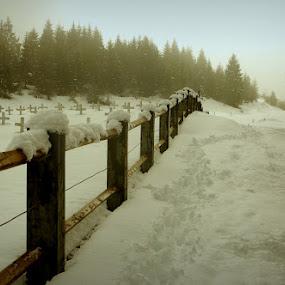 Sneg by Donat Piber - Landscapes Travel ( fog, snow, bohinj )