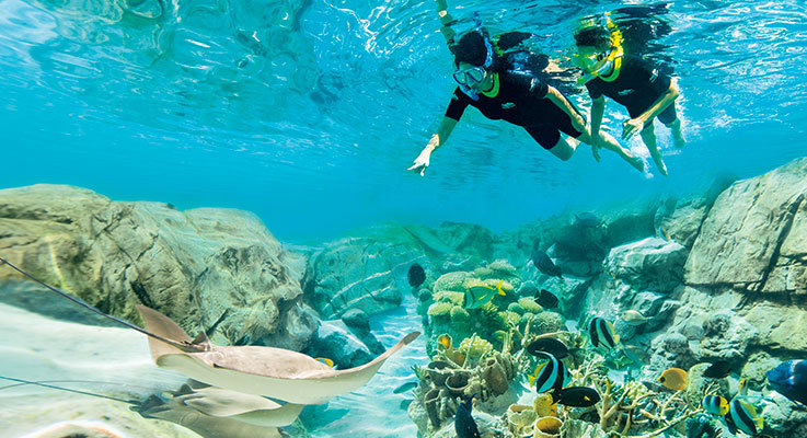 Enjoy an unforgettable day at Discovery Cove