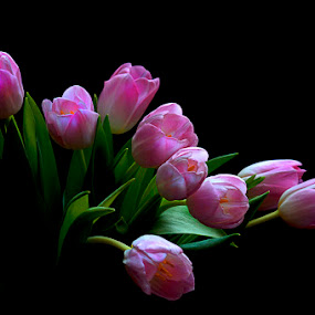 Pinky Tulip by Basuki Mangkusudharma - Nature Up Close Flowers - 2011-2013 ( tulip, pink, flower )