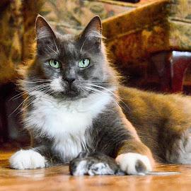 Home defense by Brenda Baird - Animals - Cats Portraits (  )