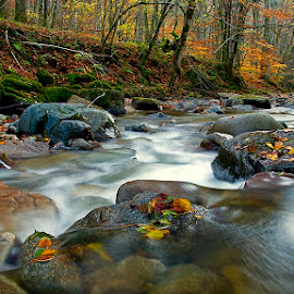 My way to You by Siniša Almaši - Nature Up Close Water ( water, natural light, up close, reflection, stream, forest, landscape, colours, nature, autumn, trees, stones, light, rocks, river,  )