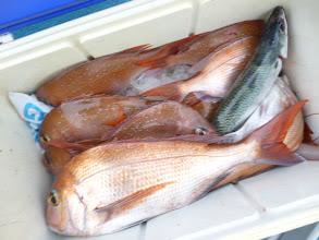 Photo: 釣果発表! オギノ先生のクーラーBOX
