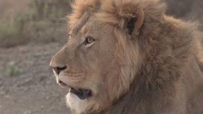 South Africa: Safari thumbnail