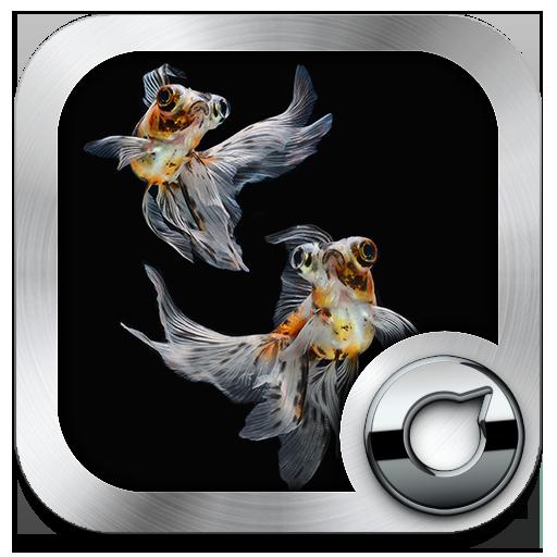 ゴールドフィッシュソロテーマ 個人化 App LOGO-APP開箱王