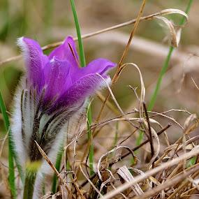 Krokusová by Jiří Staško - Flowers Flowers in the Wild