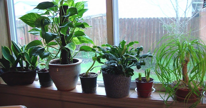 Impossible To Kill Plants That Clean The Air In Your Home