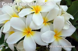 Photo: Grape Expectations - San Diego, CA - East San Diego County