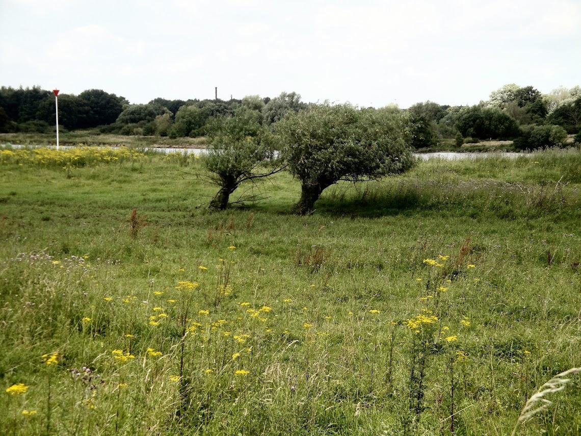 Langs de Maas bij Rijkel