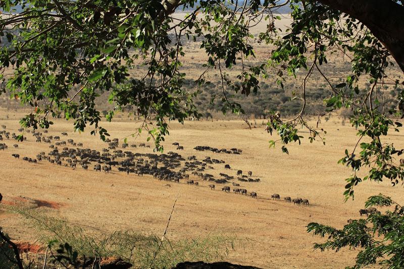 Bufali di smpaint