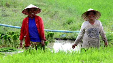 Photo: Day 350 - Happy Rice Workers