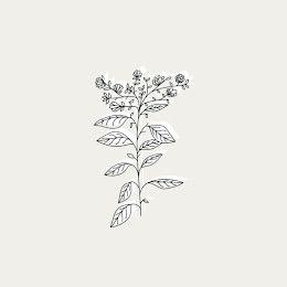 Floral Botanical - Instagram Highlight item