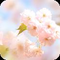 Sakura Flower Live Wallpaper icon