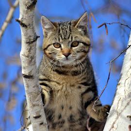 cat by Damir Kutleša - Animals - Cats Portraits ( animals, cat, tree )