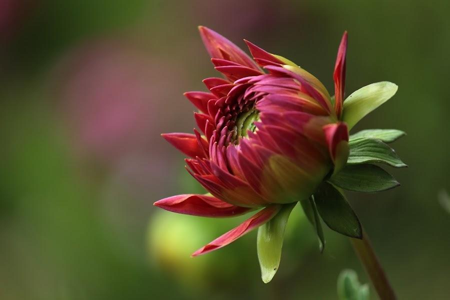 by Suresh Kumar - Flowers Single Flower