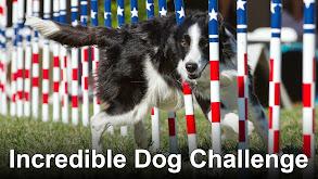 Incredible Dog Challenge thumbnail