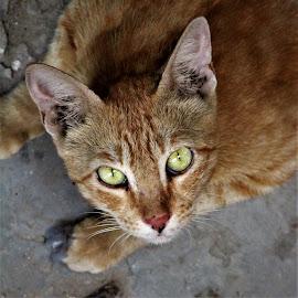 be careful  by Mukesh Kumar - Animals - Cats Portraits