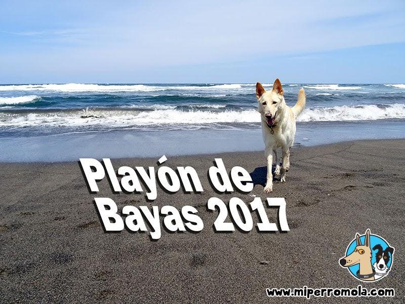 Playa para Perros Playón de Bayas la Playa Canina de Castrillón en Asturias, Can de Palleiro, Border Collie