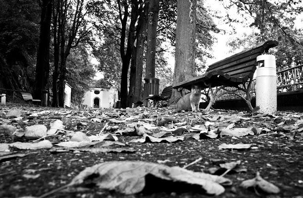 le foglie morte di l'ArTeMiSia