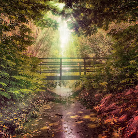 Meersel Dreef Belgium 19-7-2018 by Egon Zitter - Digital Art Places ( beam, sunlight, forest, woods, bridge, summer )