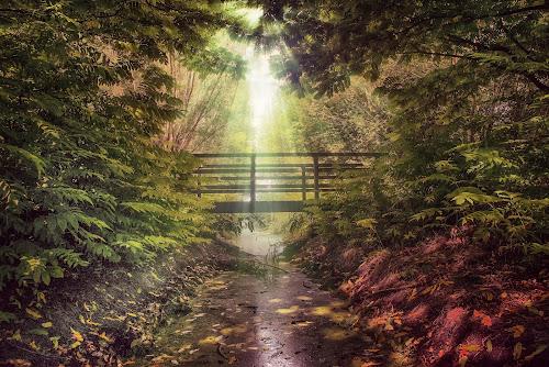 Meersel Dreef Belgium 19-7-2018 by Egon Zitter - Digital Art Places ( beam, sunlight, forest, woods, bridge, summer )