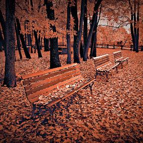 by Jean Verret - City,  Street & Park  City Parks ( autumn city park nature )