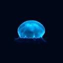 JellyFish(Free) icon