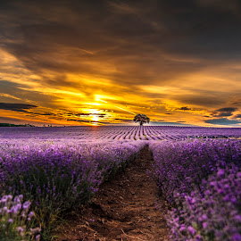 by Venelin Dimitrov - Landscapes Sunsets & Sunrises ( field )
