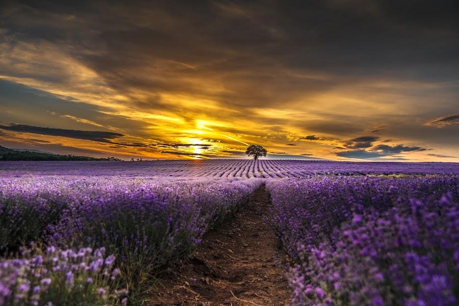 by Venelin Dimitrov - Landscapes Sunsets & Sunrises ( field )