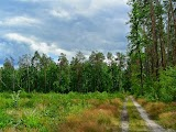 Пуща-Водицкий лес