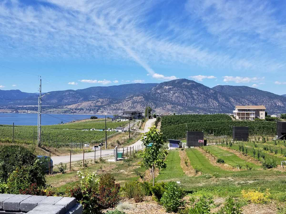 A vineyard on the Naramata Bench in British Columbia