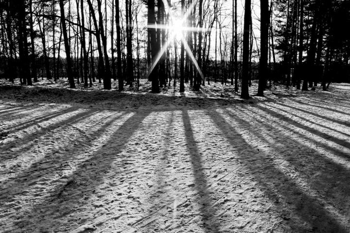 Fra gli alberi di fossabanda