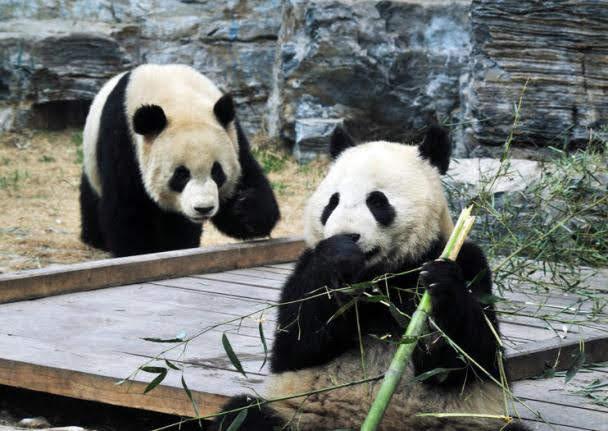 Zoológico de Pequim