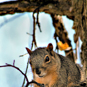Sitting Quietly by Shelly B. - Animals Other Mammals