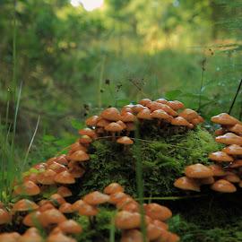 by Ove Andersen - Nature Up Close Mushrooms & Fungi