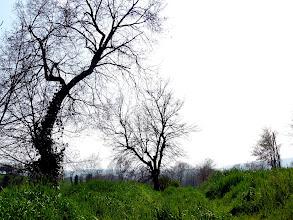 Photo: Moià green