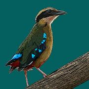 App Icon for Birds of Zambia App in Czech Republic Google Play Store
