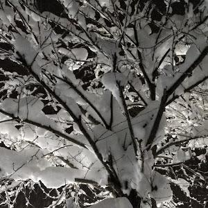 レガシィB4 BE5 BLITZEN2002モデルのカスタム事例画像 JOKERさんの2018年12月11日11:41の投稿